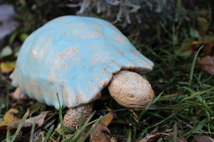 Turtle, 2014